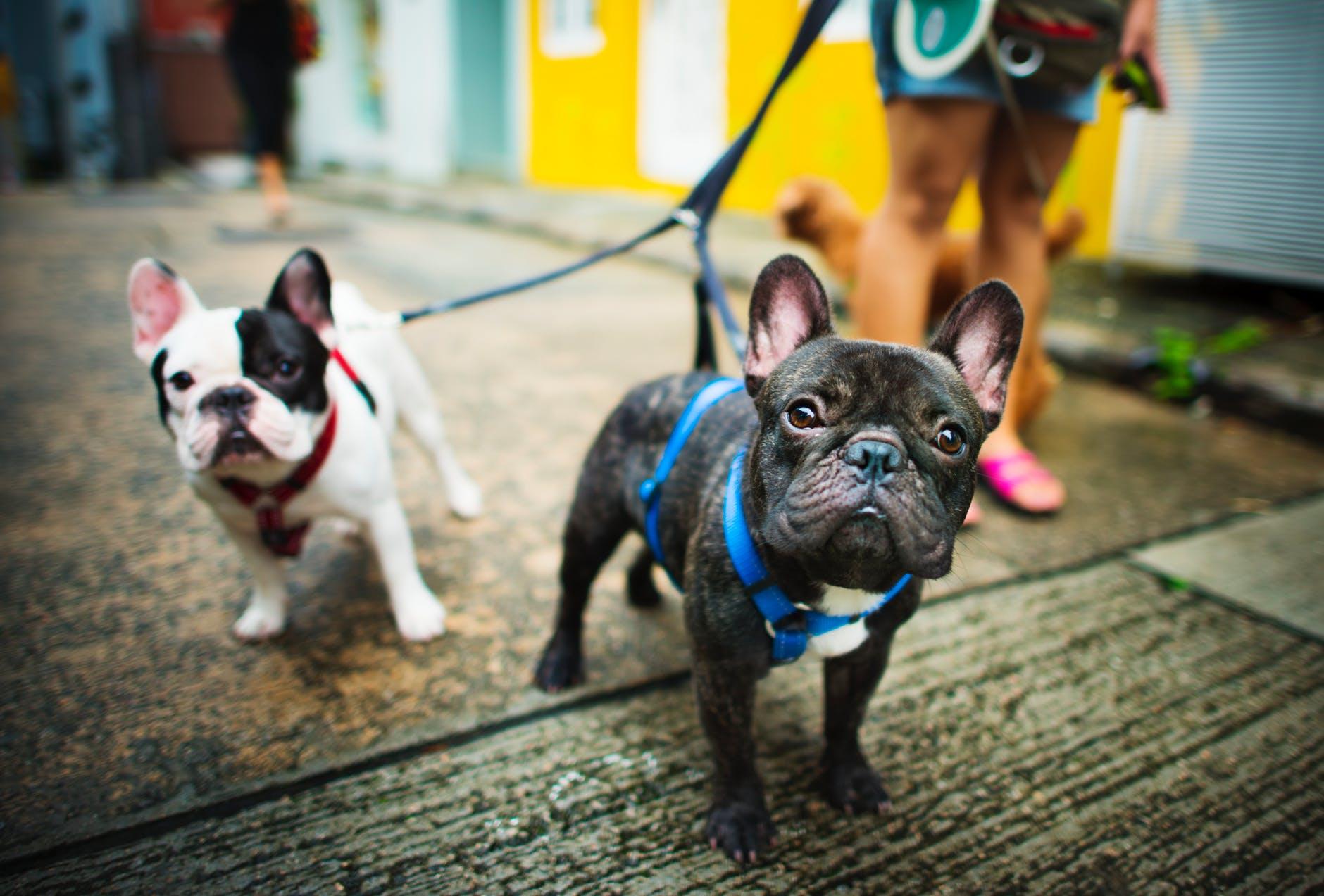dogs-leash.jpeg