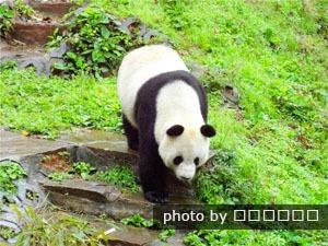 bifeng valley panda centre